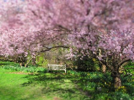 Wallingford PA Real Estate - Wallingford PA - Cherry Border At Scott Arboretum
