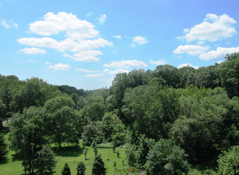 Great View Of The Woods And Meadow From The Balcony