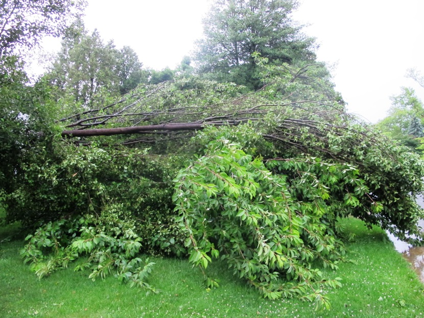 Winds From A June 23 Storm Felled Many Trees