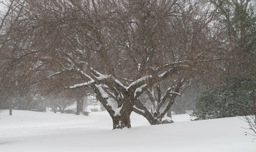 The January 23 Snowstorm Blanketed Wallingford With Almost 2 Feet Of Sonw