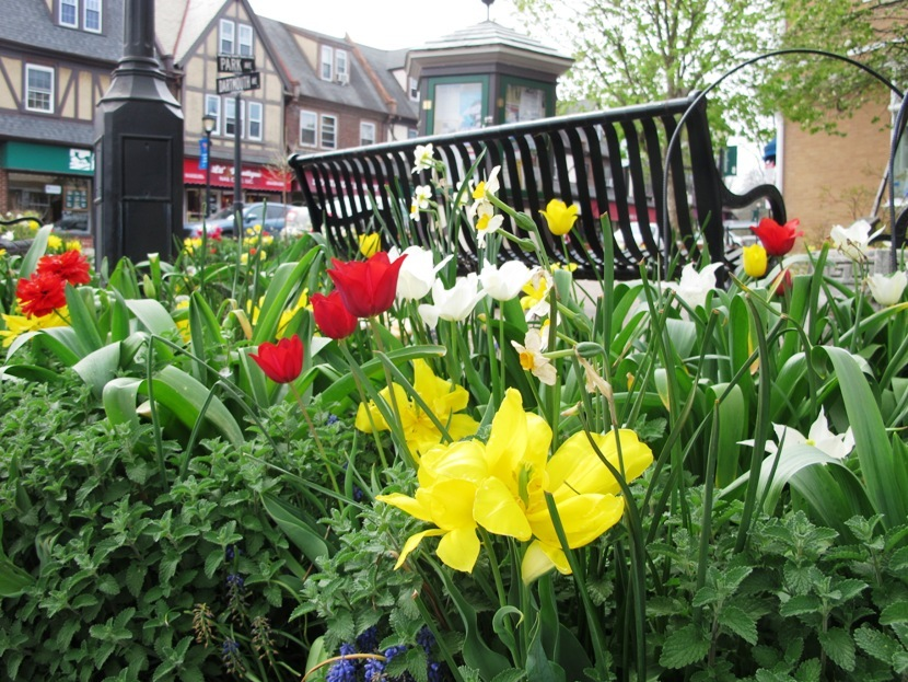 Spring Blooms In Town