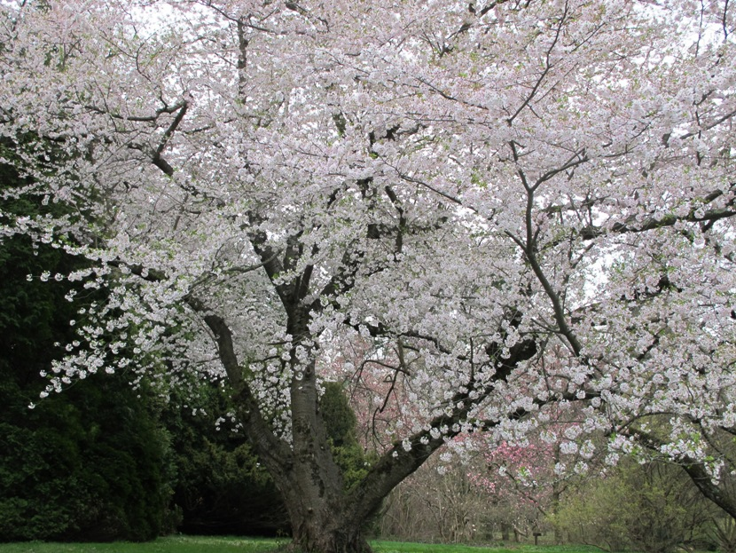 Spring In Bloom At The Taylor Arboretum