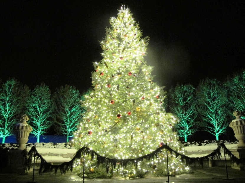 Thousands Of Lights Sets This Tree Aglow